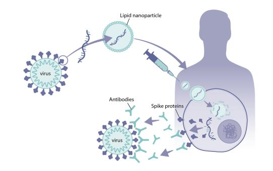 Infektion vs. durch Impfung erworbene Immunität